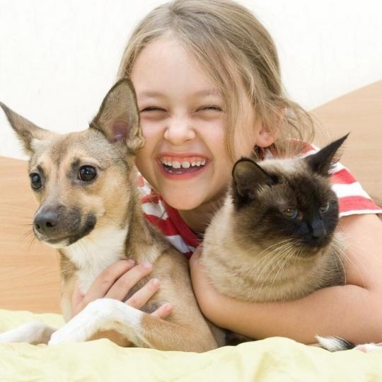 Proteger a nuestras mascotas de los molestos PARÁSITOS