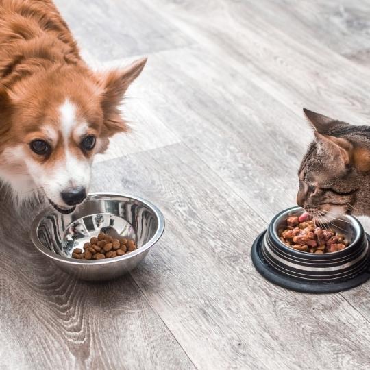 Obesidad de perros y gatos
