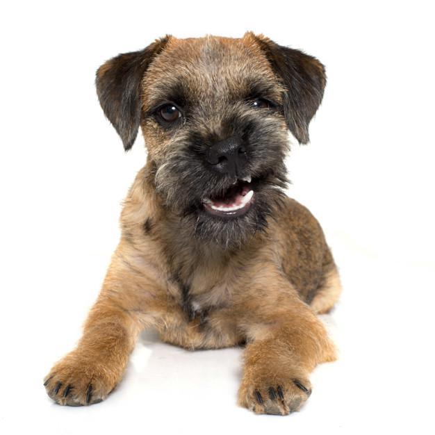 Higiene bucal de tu mascota