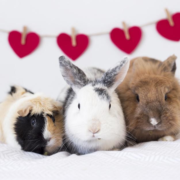 Si tu mascota es un conejo, ¡presta atención!